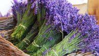 Kosova shënon rritje të eksportit të bimëve aromatike dhe mjekësore